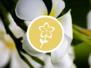 Fleur de Frangipanier senteur AromaScent diffuseur olfactif