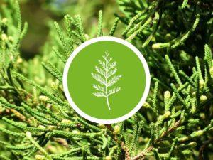 Senteur AromaScent diffuseur olfactif bois de cedre neutralisant